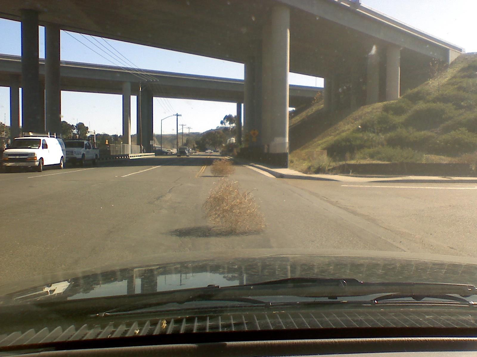 Urban Tumbleweeds