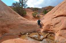 """A particularly wet portion along the """"Primitive"""" trail section of Devil's Garden"""