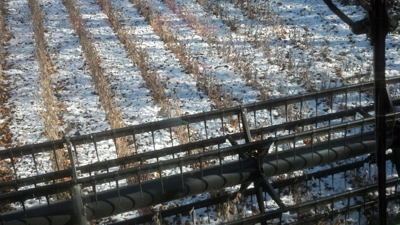 Combining Beans In Snow