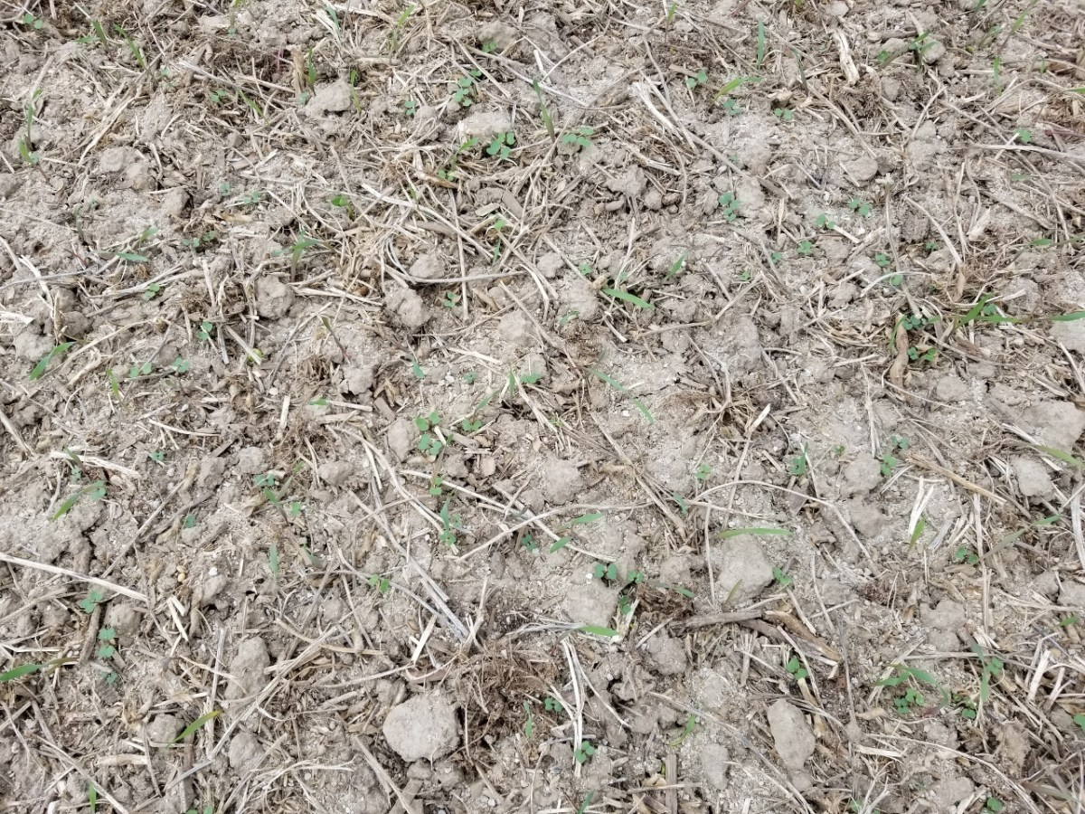 Cover Crop Close