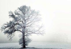 Graceful winter scene
