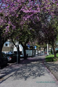 Blossoms on the aventine