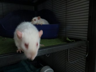 Chandra & EDI