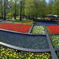 Keukenhof, the most beautiful Spring garden in the whole world!