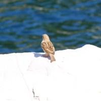 Free Bird   Transient
