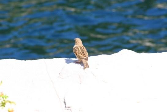 A Free Bird