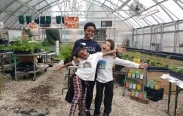 BUGS Farmers 2016_greenhouse