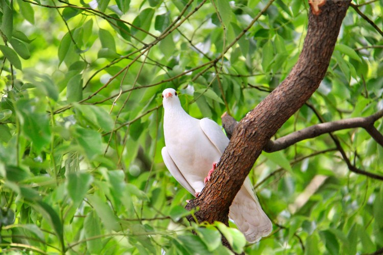 a white dove perched on a tree branch