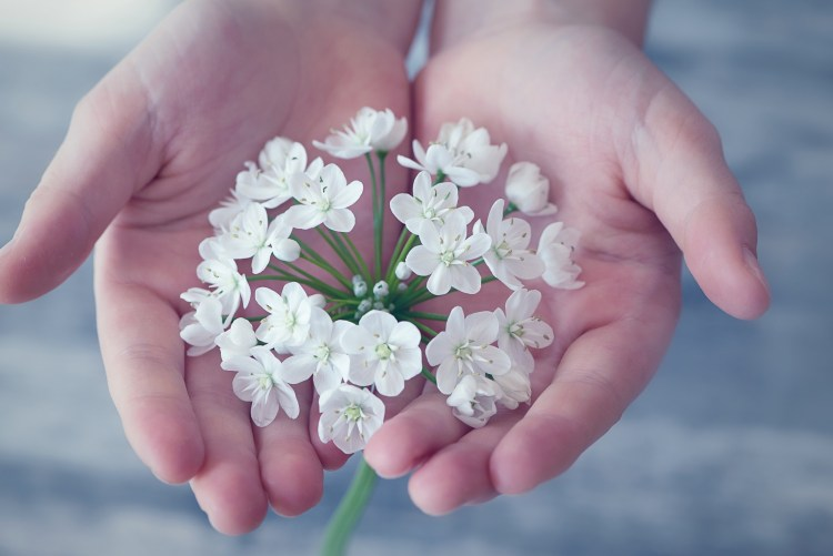 white flowers in the palm of one's hands