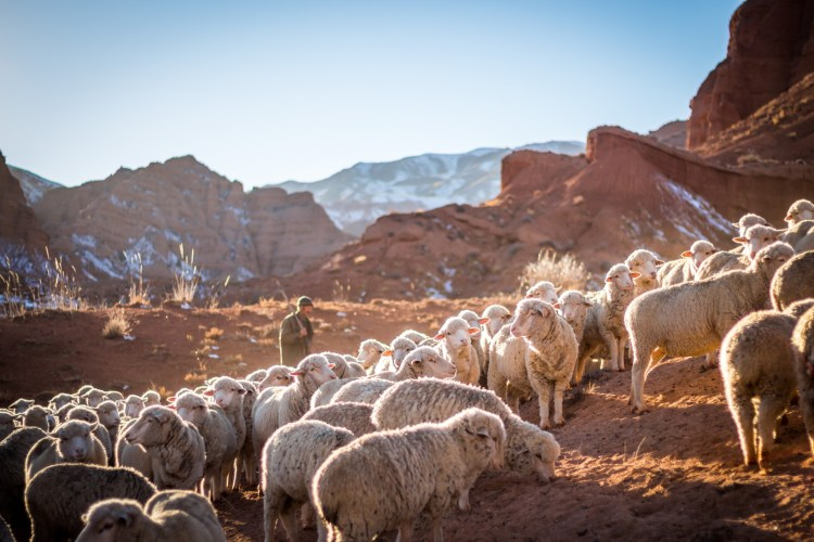 a shepherd watching over a flock of sheep in a rocky mountain
