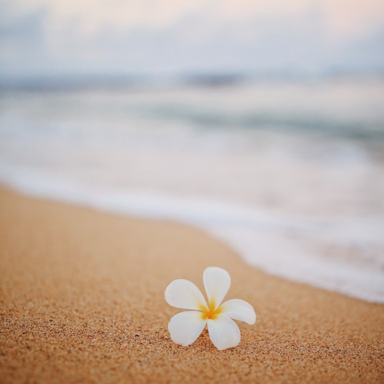 a flower on the seashore