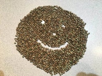 New Seeds For The Free Cannabis Seed Offer
