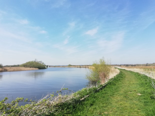 norfolk_broads_strumpshaw_fen