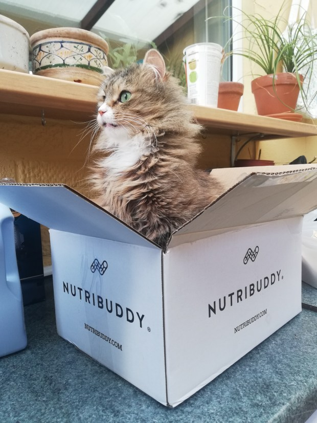 fluffy cat in nutribuddy box