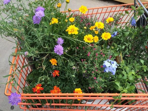 garden centre plants