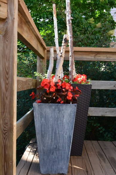 birch branches in containers