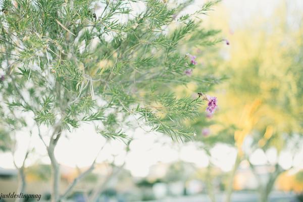 Tree Flower - Just Destiny_-2