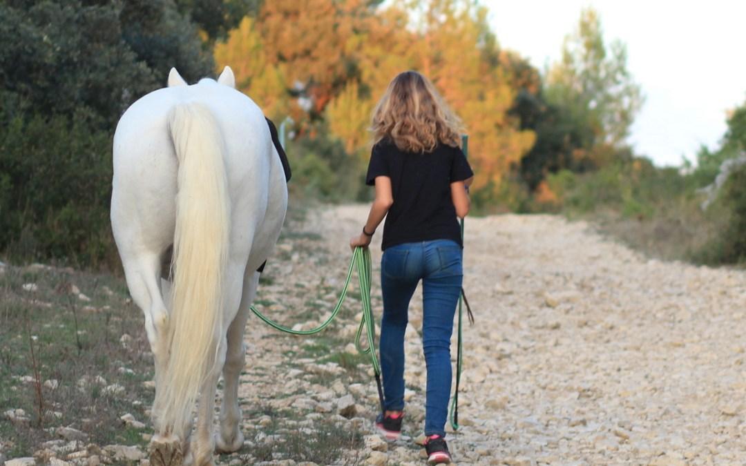 Éduquer ou dresser son cheval, quelles différences ?