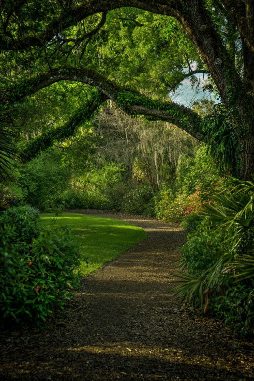 Bok Tower Gardens in central Florida has these paths all around the property that lead from one garden to the next. Fortunately these big Oaks provide plenty of shade which is a hot commodity this time of year. (No pun intended.)