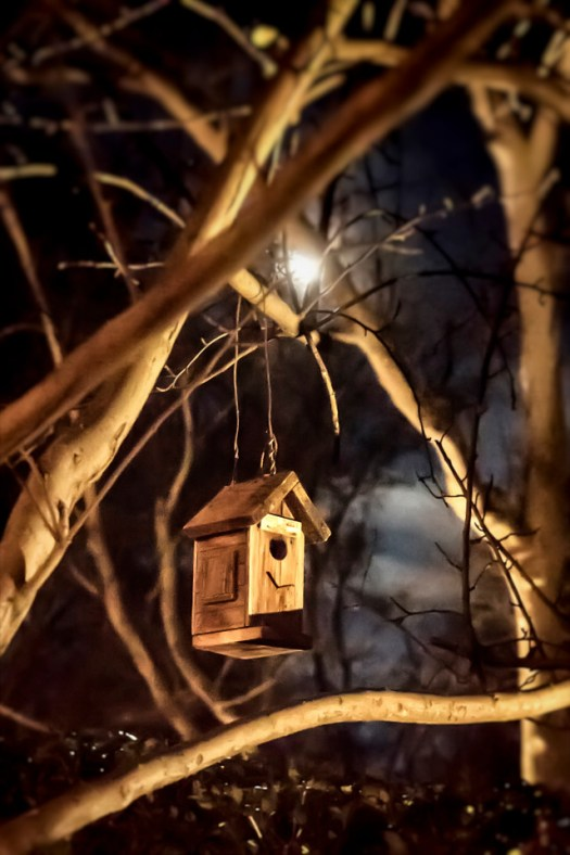 On the grounds of a  hotel in Sedona I captured this bird house by the light of the moon. It was kind of a mystical setting as I walked along pathway at night. At one point I looked up and saw what I thought was a dog, but turned out to be a wild pig walking my way. Apparently they are well known in the area and a few nights later I saw several crossing a road. Maybe a little bird was sleeping here as I took this. Birds, pigs and a full moon, mystical indeed.