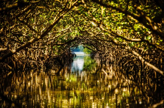 A couple of Sundays ago I took a Kayak through the Mangroves at Robinson Park in Bradenton. To be honest, until a few weeks ago I'd never even heard the term