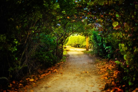 This is a shaded path through Leffis Key on Anna Maria Island in Florida. For all intents and purposes its hidden as I've driven by it for years and never noticed. So it was a pleasant surprise when I happened upon it early one morning. The entrance is small and easy to miss and the first thing you do is walk through this shaded path. When you reach the other side you are in a quite world surrounded by the mangroves and wildlife. The bulk of it extends out away from the highway into the inter-coastal waterway. This pathway reminded me of a passage to a secret garden. In a way I suppose it is.