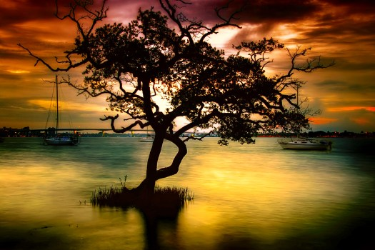This is dawn in Sarasota Florida. I've been here dozens of times but never noticed this tree, however this time something about it in the twilight set it apart. Twilight and dusk are my two favorite periods of the day for taking pictures. The mood of something, like this tree, is complete and real, yet disappears just a few minutes later. The other thing that makes this special is that I was able to drag myself out of bed to take this photo. That's no little accomplishment.