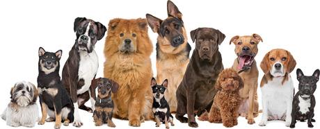 file_2153_column_popular-dog-names.jpg