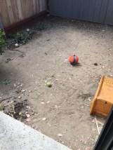 Backyard, before