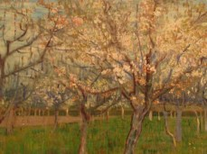 """""""The Pink Orchard"""""""