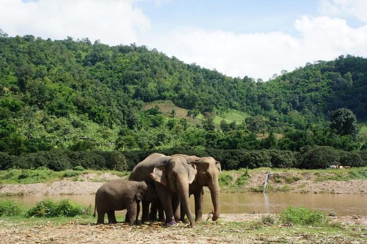Reisdagboek Thailand – Chiang Mai