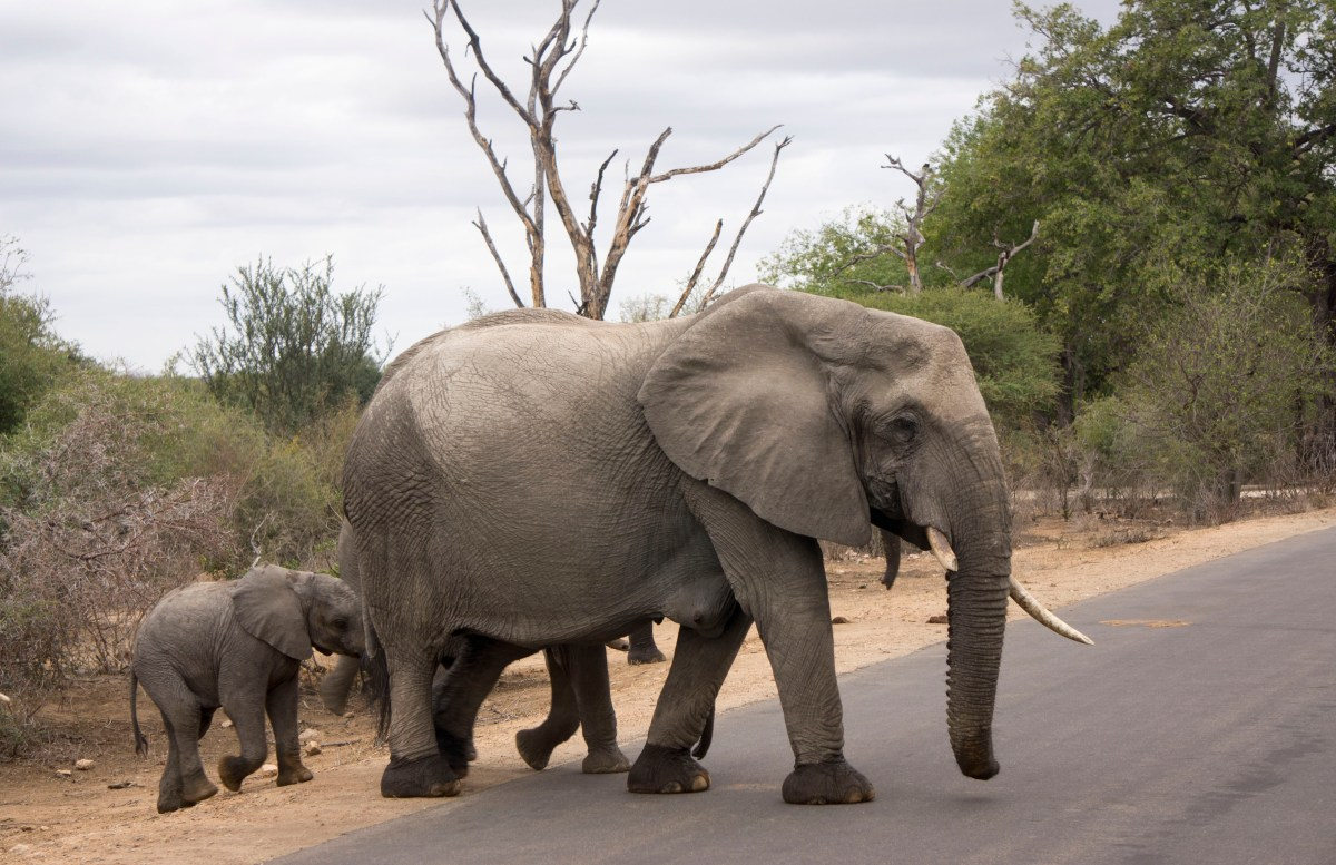 Reisdagboek Zuid Afrika - Safari in Krugerpark