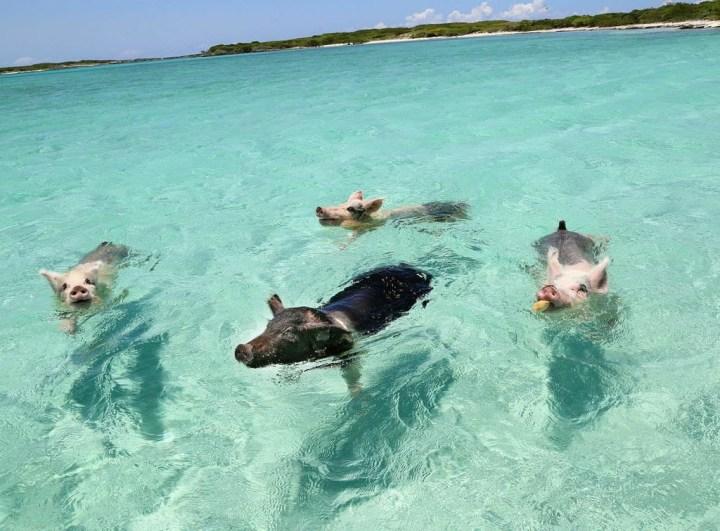bucketlist bahamas