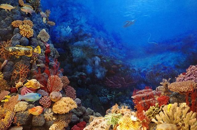 Duurzamer reizen - koraal