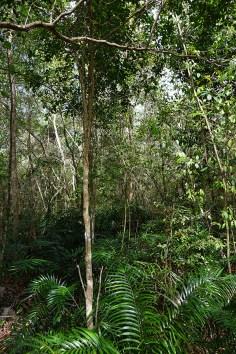 Hoyo Azul Dominicaanse Republiek Scape Park