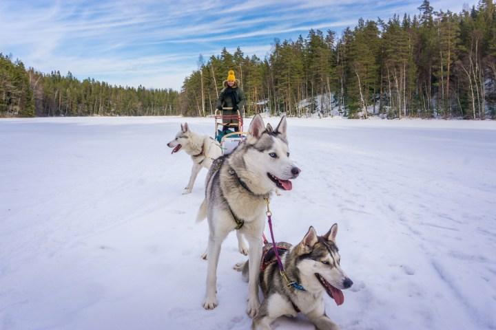 huskytocht-finland