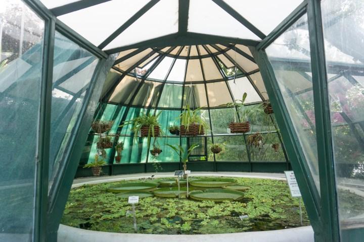 Kas in botanische tuin