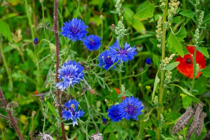 Wilde bloemen Achterhoek