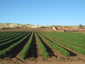 Farm on Camino