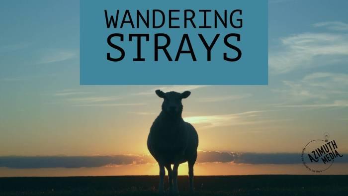 Wandering Strays