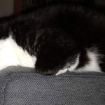black and white cat sleeping on sofa