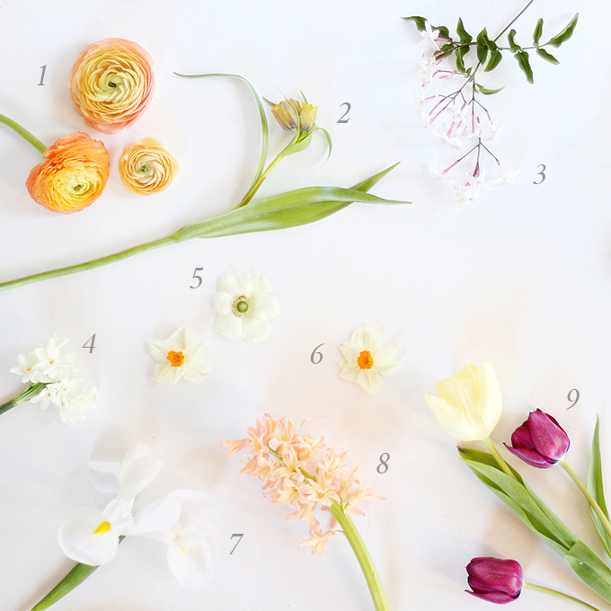 An Introduction to Spring Flowers | How to Identify Spring Flowers // JustineCelina.com