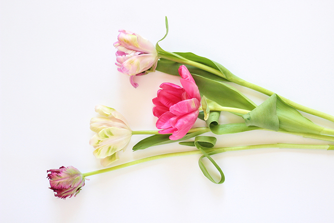 All About Tulips | Parrot Tulips // JustineCelina.com