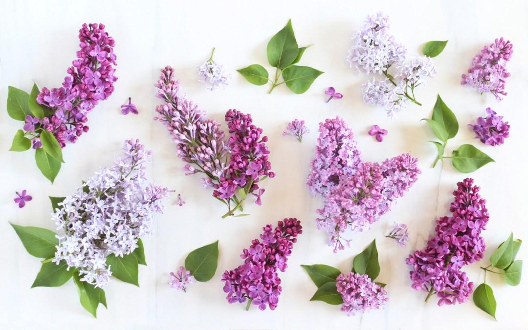 Digital Blooms Desktop Wallpaper 2 | June 2016 // JustineCelina.com x Rebecca Dawn Design