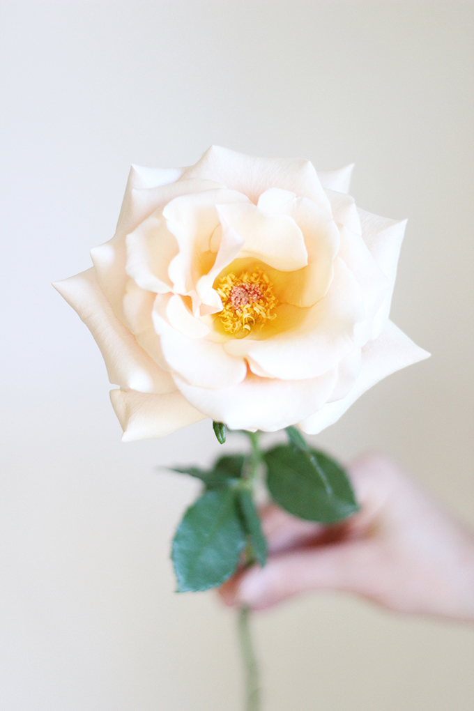 All About Roses | A Single Mother of Pearl Rose // JustineCelina.com x Rebecca Dawn Design