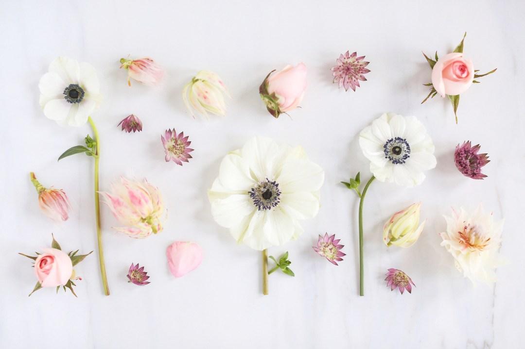 DIGITAL BLOOMS FEBRUARY 2018 | Free Blush Floral Desktop Wallpapers for Valentine's Day | Design 3 // JustineCelina.com x Rebecca Dawn Design