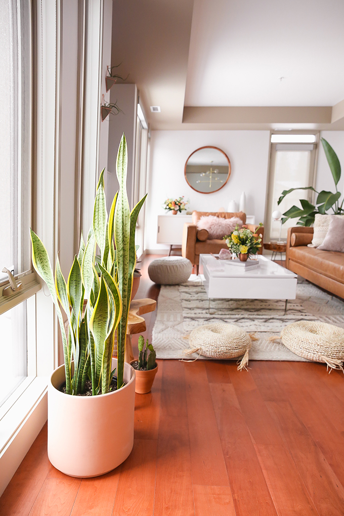 How to Select and Care For Houseplants | Snake Plant Care and Watering Schedule // JustineCelina.com