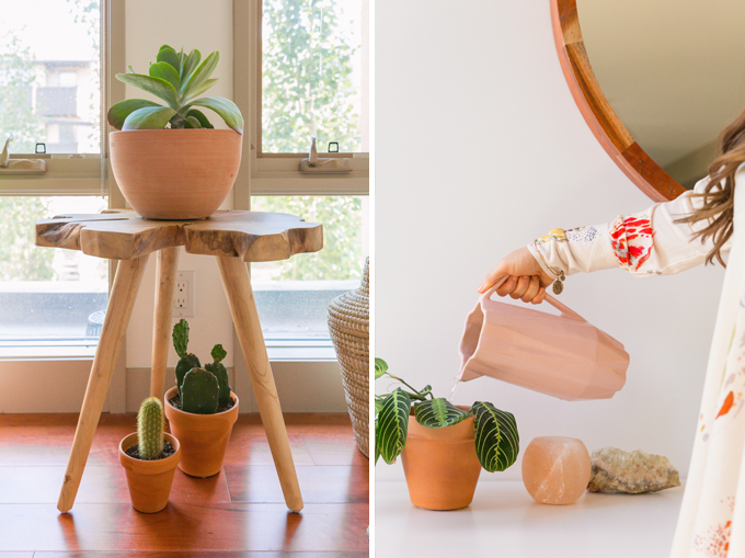 How to Select and Care For Houseplants | Care and Watering Schedules // JustineCelina.com