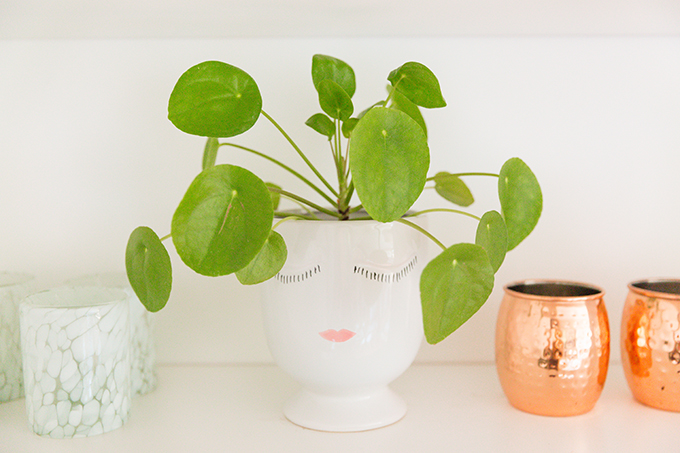 How to Select and Care For Houseplants | Japanese Money Plant Care and Watering Schedule // JustineCelina.com