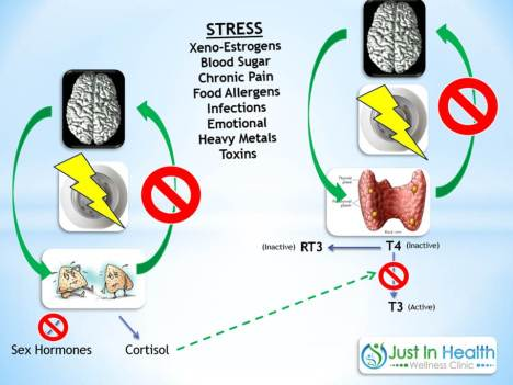 hormonal stressors